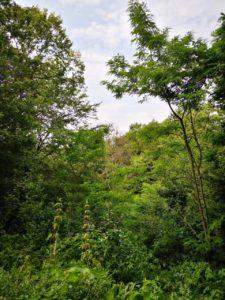 forêt du Bois de Rosoy
